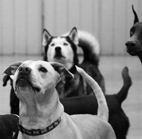 Lake County Dog Adoption Center